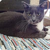 Adopt A Pet :: Rudy - St Paul, MN