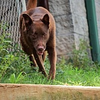 Adopt A Pet :: Radar - Walton County, GA