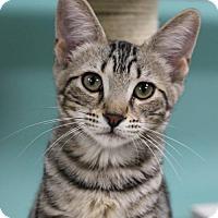 Adopt A Pet :: Pixie - Tallahassee, FL