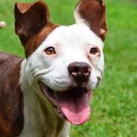 Adopt A Pet :: Patches ++ - Ridgeland, SC
