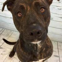 Adopt A Pet :: Zeke - Land O'Lakes, FL