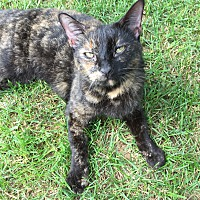Adopt A Pet :: Molly - Exton, PA
