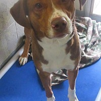 Adopt A Pet :: Pound Dog 143609 - Rootstown, OH