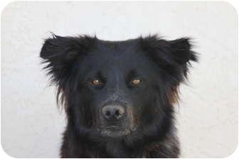 Border Collie Mix Dog for adoption in San Pedro, California - HOUSTON