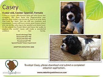 Cocker Spaniel Dog for adoption in Ottawa, Ontario - Casey