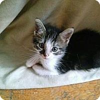 Adopt A Pet :: Noah - Brooklyn, NY