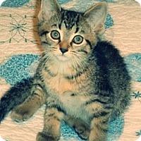 Adopt A Pet :: Santa Barbara - Green Bay, WI