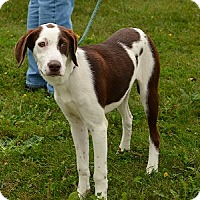 Adopt A Pet :: Molly - Hamilton, ON
