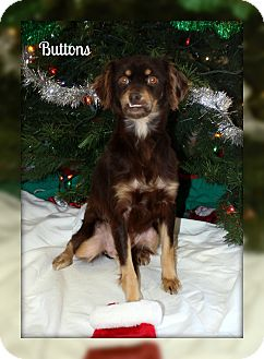 Terrier (Unknown Type, Small) Mix Dog for adoption in Atchison, Kansas - Buttons