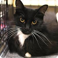 Adopt A Pet :: Boo Boo - Sacramento, CA