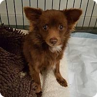 Adopt A Pet :: Alfie - North Hollywood, CA