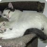 Adopt A Pet :: Artie - Powell, OH
