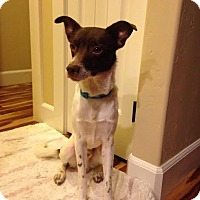 Adopt A Pet :: Rory - Meridian, ID