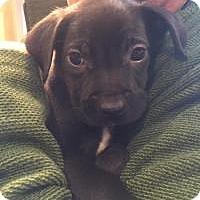 Adopt A Pet :: Java - Marlton, NJ