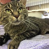 Adopt A Pet :: Bella - CLEVELAND, OH