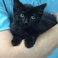 Adopt A Pet :: ZK - Rincon, GA