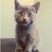 Adopt A Pet :: Kal - Austintown, OH