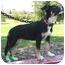 Photo 3 - Border Collie/Shepherd (Unknown Type) Mix Puppy for adoption in Los Angeles, California - Lola von Amilia
