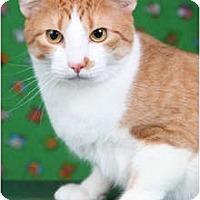 Adopt A Pet :: Barney - Garland, TX