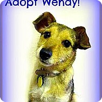 Adopt A Pet :: Wendy - Lawrence, KS