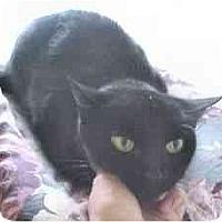 Adopt A Pet :: Baby - Lunenburg, MA