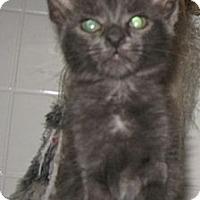 Adopt A Pet :: Casandra - Dallas, TX