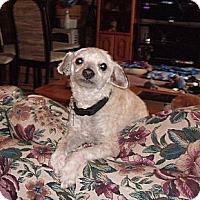 Adopt A Pet :: Kramer - La Habra, CA