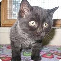 Adopt A Pet :: Jazzy - Shelton, WA