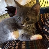 Adopt A Pet :: Tinkerbell (KG) - Trenton, NJ
