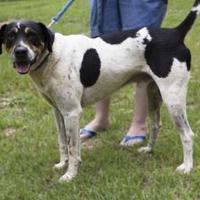 Adopt A Pet :: Freddie - Hopkins, SC