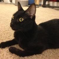 Adopt A Pet :: Sandy - Cumming, GA