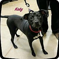 Labrador Retriever Mix Dog for adoption in Ahoskie, North Carolina - Katy