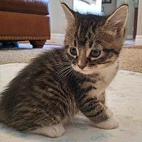 Adopt A Pet :: Kubo - Midvale, UT