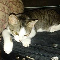 Adopt A Pet :: Pi - Columbus, OH