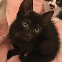 Adopt A Pet :: Schwartz TG - Schertz, TX