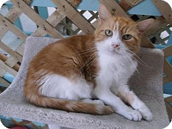 Domestic Shorthair Cat for adoption in Eighty Four, Pennsylvania - Jenny