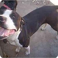 Adopt A Pet :: Capone - Bakersfield, CA