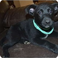 Adopt A Pet :: Sky - Hagerstown, MD