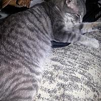 Adopt A Pet :: Mona Lisa - NC - Liberty, NC