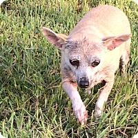 Adopt A Pet :: Camellia - El Campo, TX