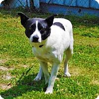 Adopt A Pet :: Turtle - 042904k - Tupelo, MS