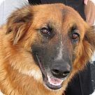 Adopt A Pet :: Charmaine