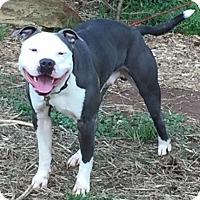 Adopt A Pet :: TINY - Dallas, NC