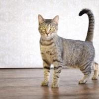 Adopt A Pet :: Nova - Fort Dodge, IA
