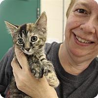 Adopt A Pet :: Cori - Elyria, OH