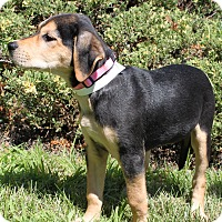 Hound (Unknown Type) Mix Puppy for adoption in Philadelphia, Pennsylvania - Lady