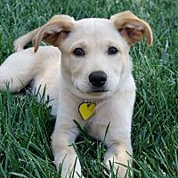 Adopt A Pet :: Reagan - Yorba Linda, CA