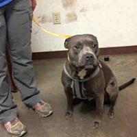 Adopt A Pet :: A3990175 - Phoenix, AZ