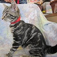 Adopt A Pet :: ADAM - Anna, IL