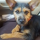 Adopt A Pet :: Laykyn